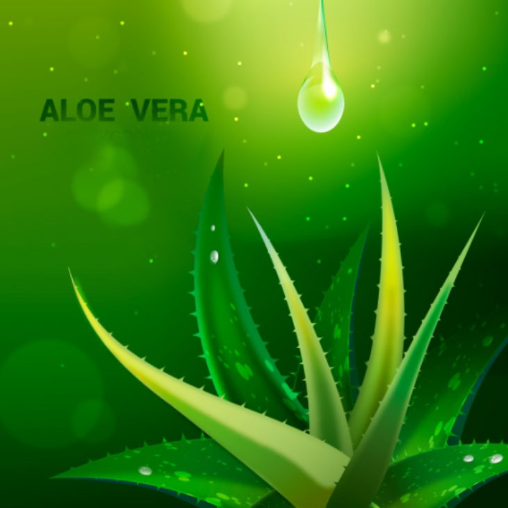Miracle Gel Ingredient - Aloe Vera